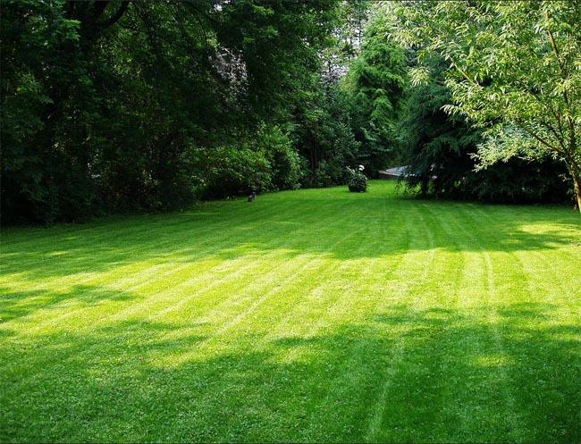 купить газонную смесь высшего качества мятлика лугового и овсянницы красной dlf triffolium в магазине семян Сидландия - 4seed.jimdo.com