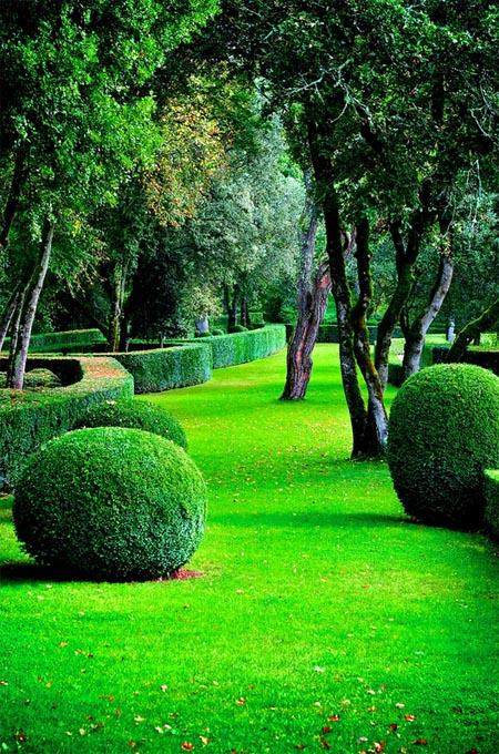 купить в розницу газонную траву eurograss качество германия в магазине семян Сидландия