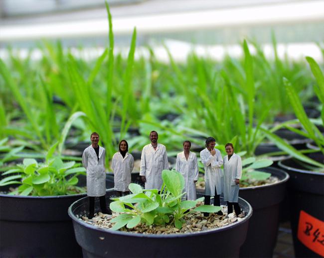 купить микоризу на 4seed.jimdo.com micorrhiza качество голландия