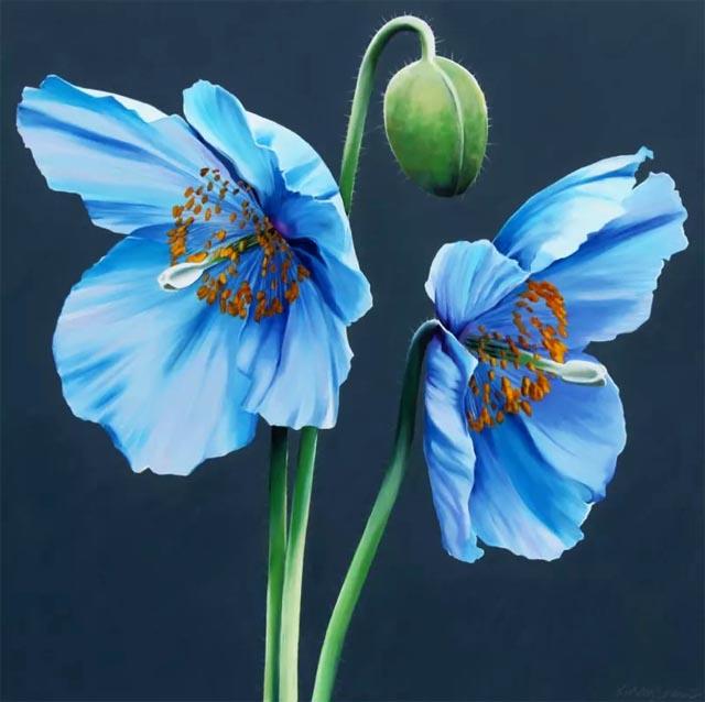 продажа семян мака гималайского голубого Papaver Himalayan Blue Poppy - Meconopsis Baileyi- seeds редкие коллекции цветов