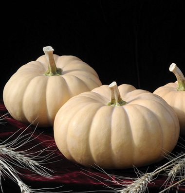 семена тыквы pumpkin Autumn Crown seeds