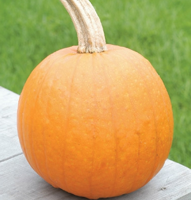 семена тыквы pumpkin Baby Pam seeds