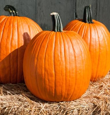 семена тыквы pumpkin Cargo PMR seeds