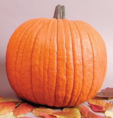 семена тыквы pumpkin Howden seeds