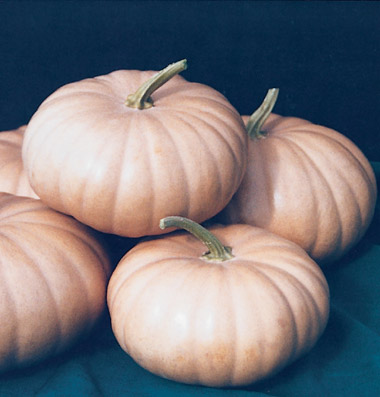 семена тыквы pumpkin Long Island Cheeseseeds