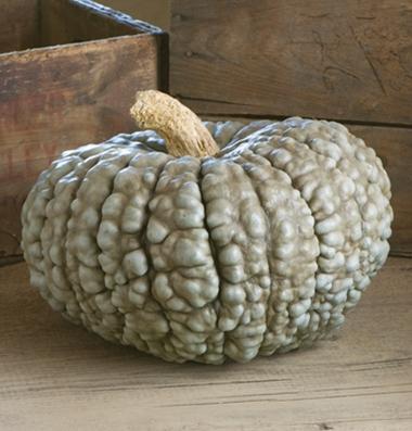 семена тыквы pumpkin Marina Di Chioggia seeds