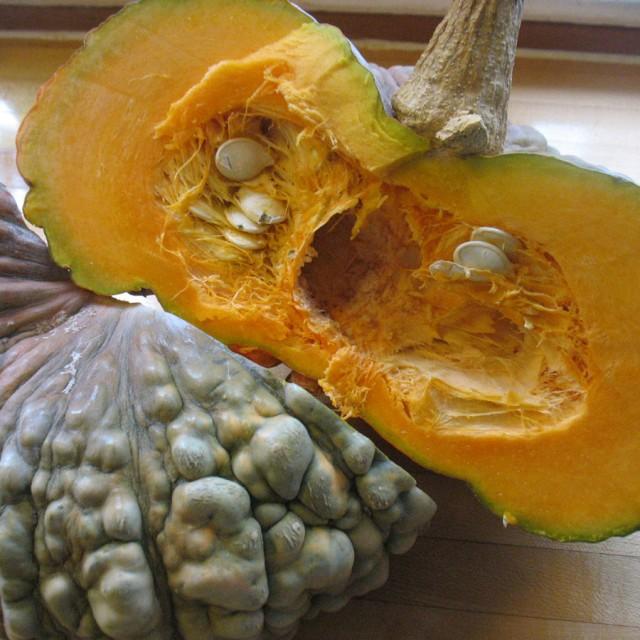 продажа семян тыквы pumpkin Marina Di Chioggia seeds