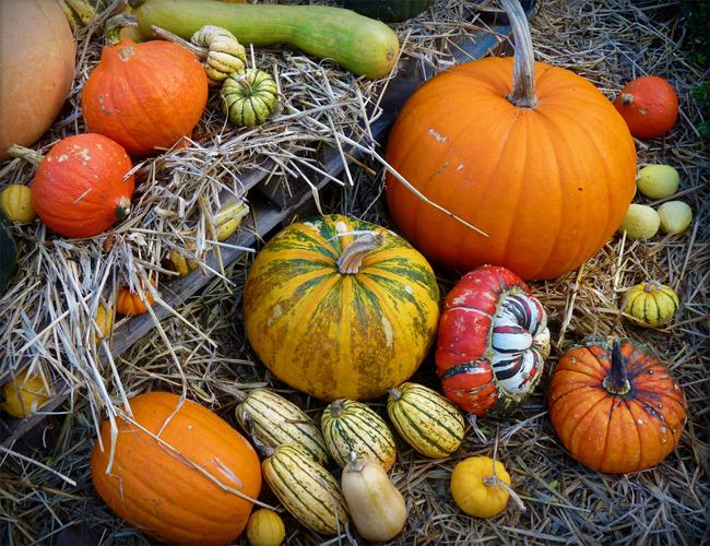 купить семена тыквы более 60 разных сортов pumpkin seeds