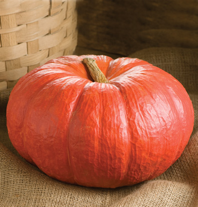 семена тыквы pumpkin Rouge Vif D'Etampes seeds