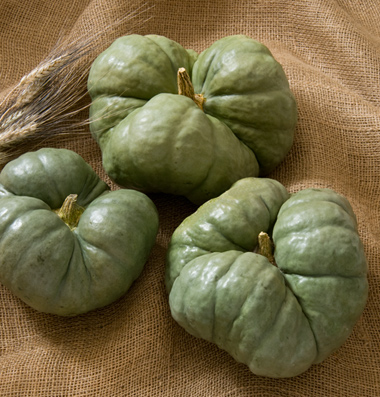 семена тыквы pumpkin Triamble seeds