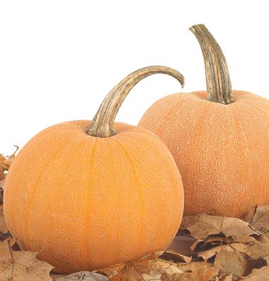 семена тыквы pumpkin Winter Luxury seeds