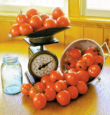 продажа семян томатов bellstar seeds