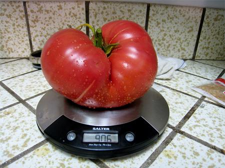 семена крупных томатов brandywine seeds