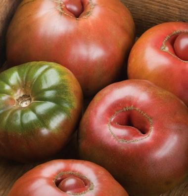 купить семена томатов black krim черный крым seeds