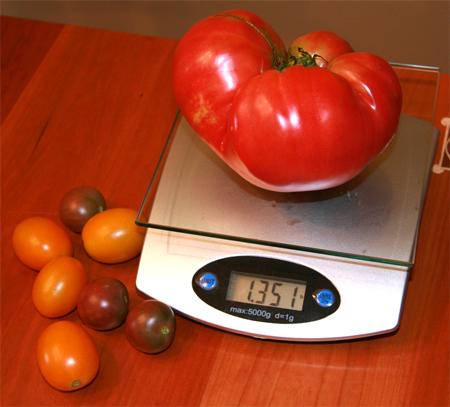 купить лучшие сорта томата brandywine pink seeds по отличной цене
