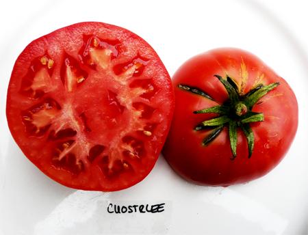 высокоурожайные сорта томатов cuostralee seeds в большом каталоге семян интернет магазина