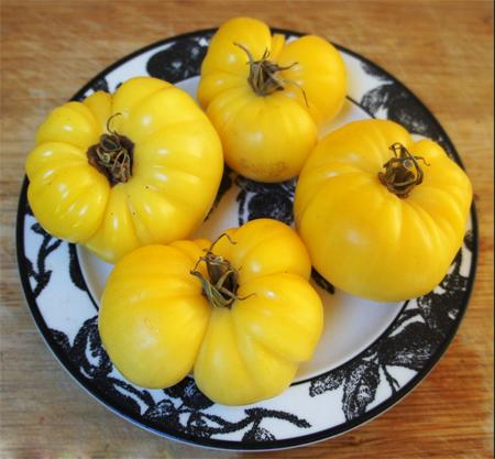 распродажа семян помидор dixie golden giant seeds золотой гигант дикси расада