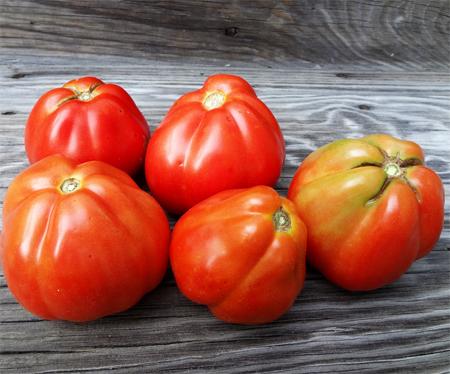 купить семена помидор на весну goldmans italian-american seeds супер урожайный сорт томата