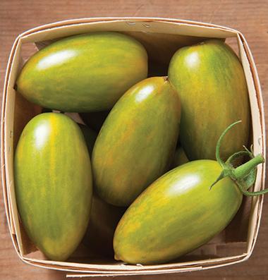 реализация сортовых семян томатов Green Tigerseeds