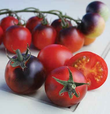 цена на семена помидоров Indigo Cherry Drops seeds
