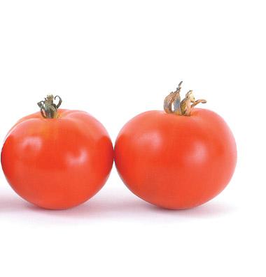 семена томата oregon Spring seeds продажа оптом