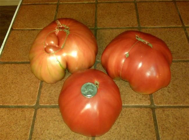 помидоры семена Pruden's Purple seeds купить