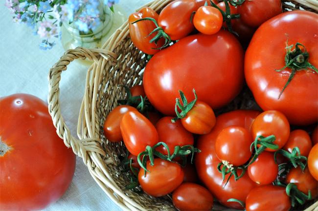 купить семена томатов более 50 сортов большой выбор tomatoes seeds