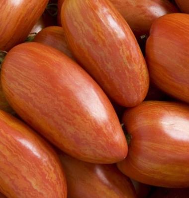 семена томатов Speckled Roman seeds купить