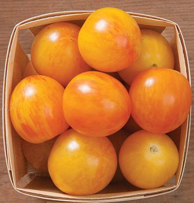 купить семена томатов Sunrise Bumble Bee seeds