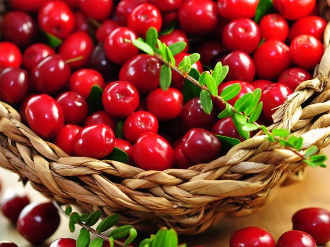 купить сортовые семена клюквы крупноплодной Vaccinium много сортов клюквы в питомнике растений ben lear, mc. farlin